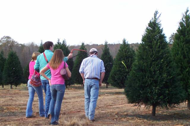 southern christmas tree association alabama louisiana mississippi choose and cut christmas trees - Christmas Tree Farm Near Me