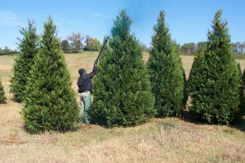 We Encourage All Who Are Considering Planting Christmas Trees, New And  Experienced Growers, Suppliers, And Anyone Interested In The Industry To  Join The ...